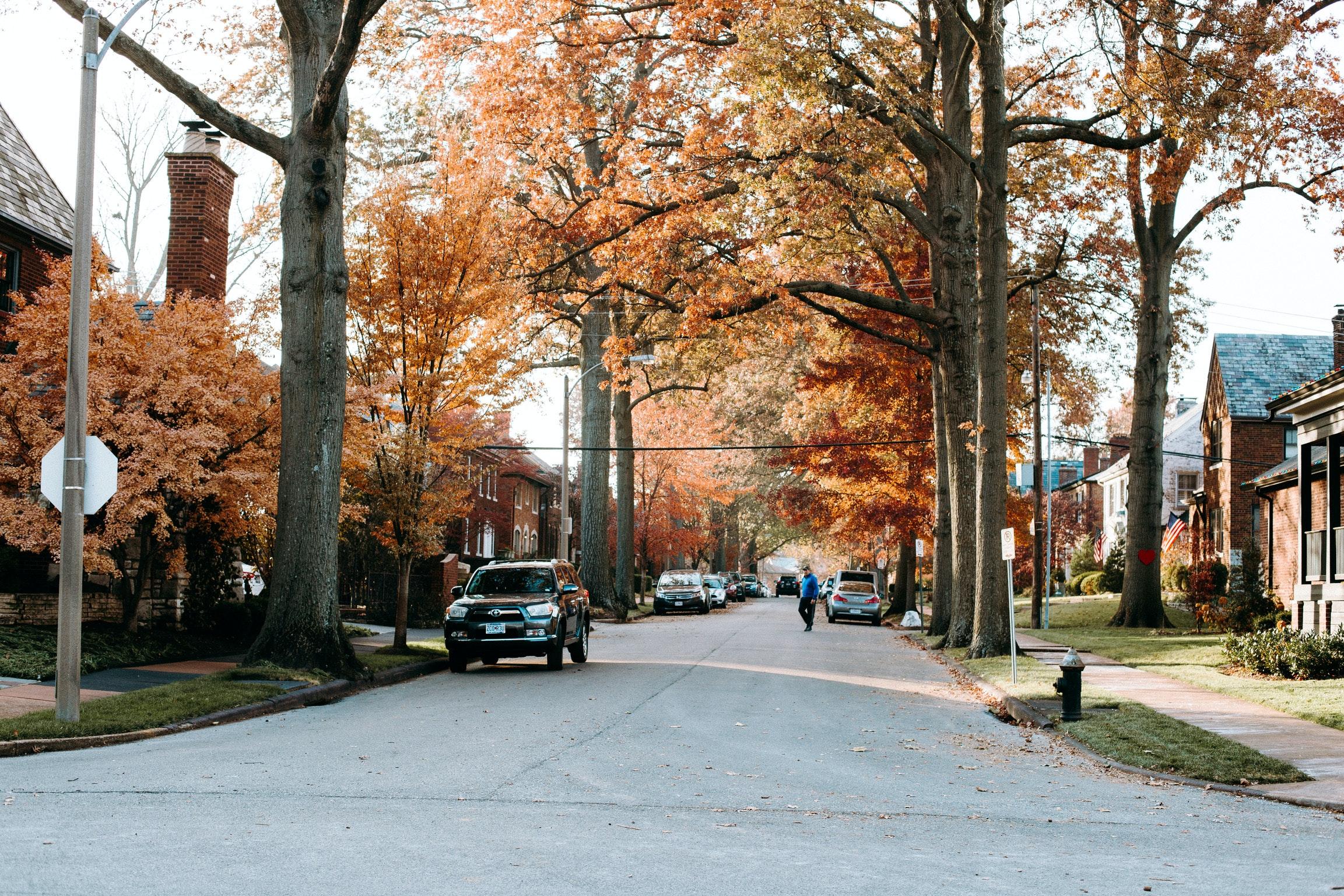 street lined trees